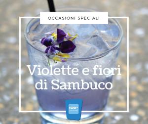 Violette e fiori di Sambuco